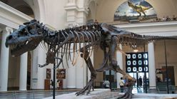 Photo of Sue the T. rex
