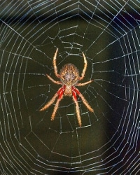 Spider and web photo