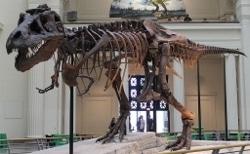 T. rex photo