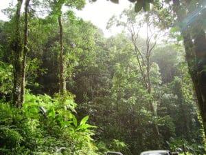 Martinique forest photo