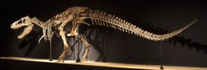 Tarbosaurus photo