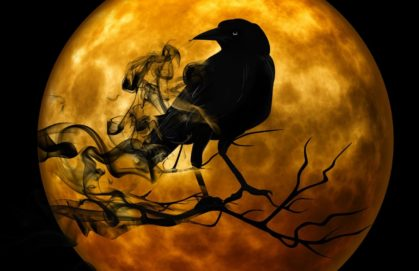 raven on branch in front of full moon