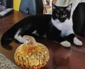 cat with glass pumpkin