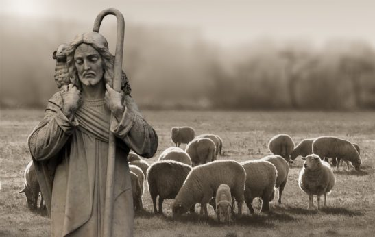 shepherd and flock