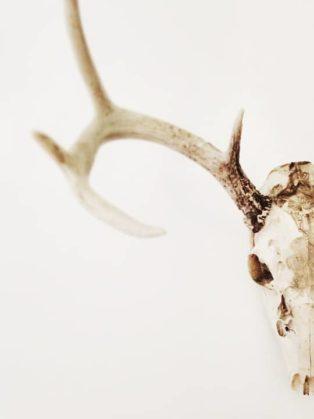 skull and antler