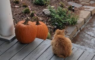 Garfield and Pumpkins