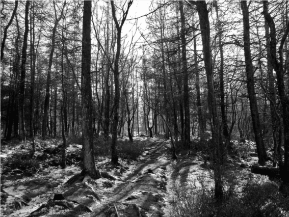 spooky black and white woods