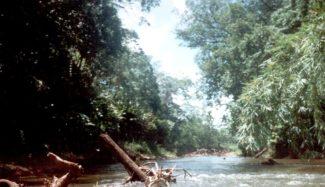 Río Plátano photo