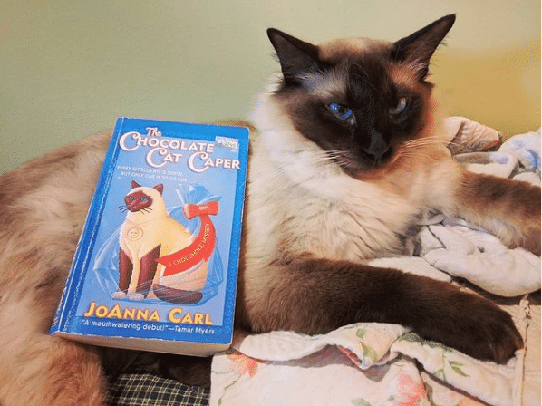 My cat, Ziggy, posing with The Chocolate Cat Caper.